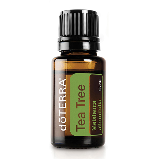 doTERRA Tea Tree Melaleuca Essential Oil Photo